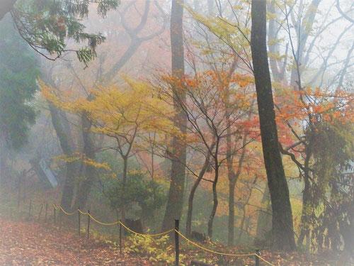 小雨の降るなかガスでふんわりとした紅葉がいい雰囲気です。