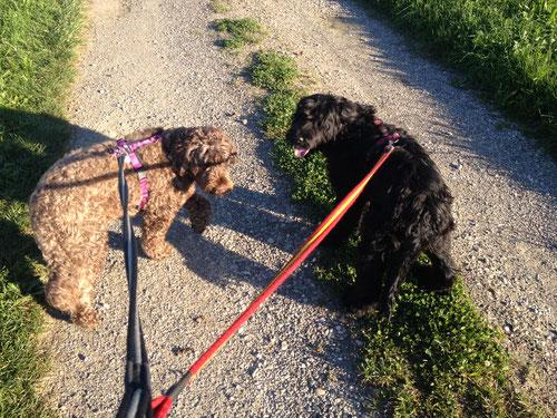 Smartes Leinenhandling ist schwierig, aber ausgesprochen hilfreich und wichtig für erfolgreiches Training, weil kein Stress erzeugt wird - weder bei Hund noch Mensch.