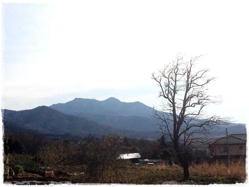 北側から眺めた筑波山。雲取山で有名な躍る木にちょっと似てる??