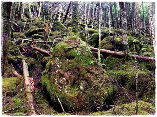 苔が生い茂る山中。まるで白谷雲水峡のようでした