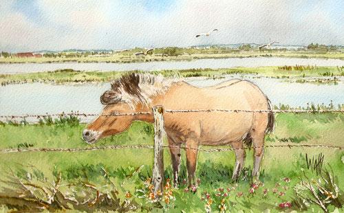 chevaux Henson de la baie de somme