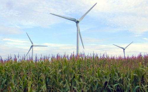 Windkraft und Maisanbau (Raum Beverstedt)