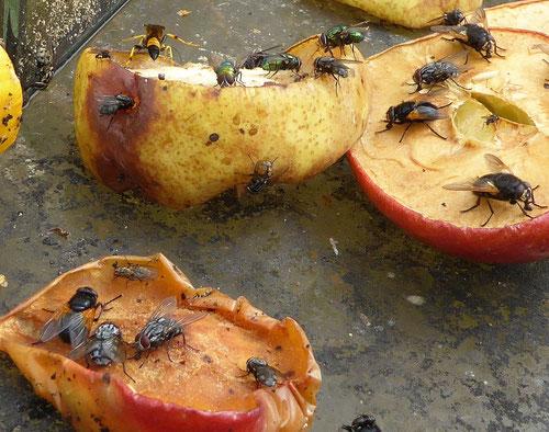 Obstreste für Insekten