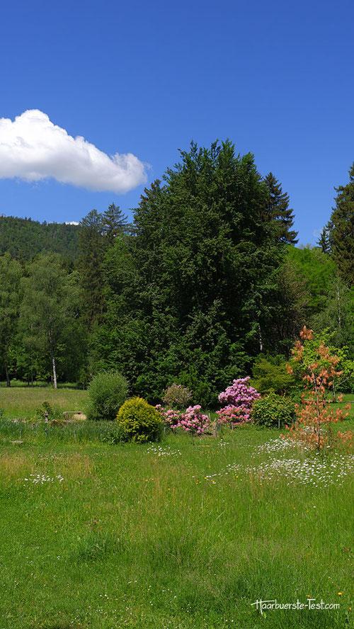 Blühende Blumen im Kurpark.