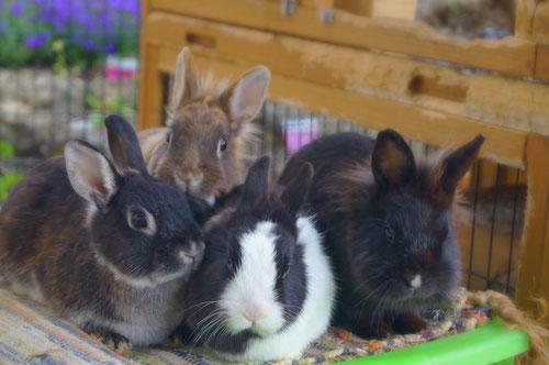 Fellnasen in der tiergestützten Sprachtherapie der logopädischen Praxis MundART in Forchheim.