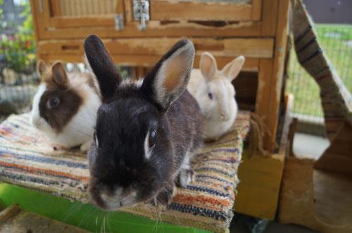 Menschliches und tierisches Wohl steht an erster Stelle in der tiergestützten Sprachtherapie der Praxis für Logopädie und Sprachtherapie MundART in Forchheim.