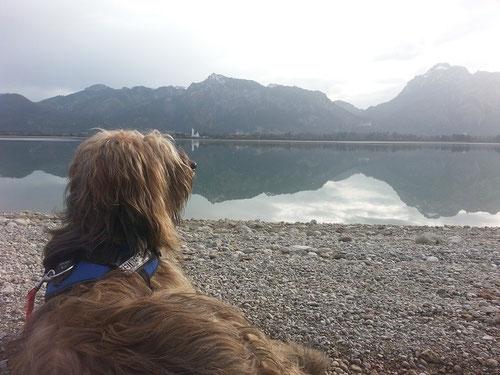 CK 24.11.2014: Forgensee mit Blick auf Neuschwanstein