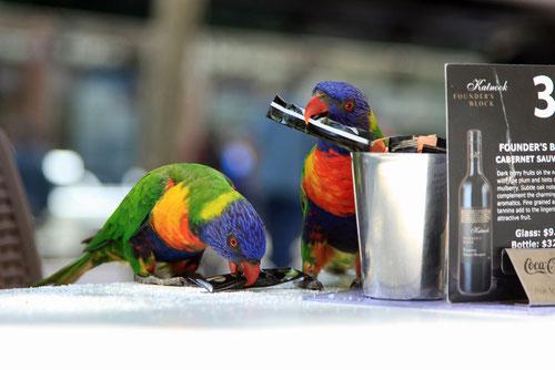 Freche Papageien