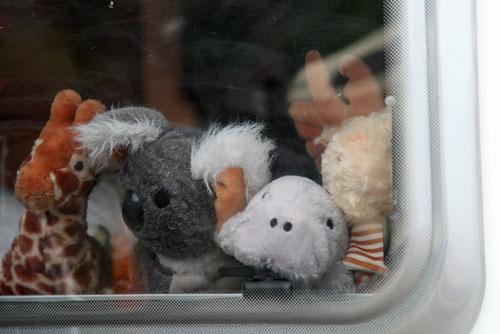 Mimi, Koali, Dugi & Elchi Otti schauen beim Rückfenster raus