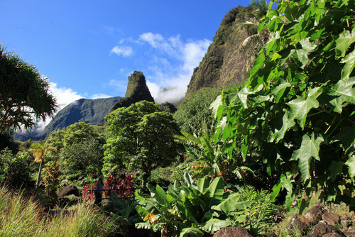 Iao Valley mit der Needle