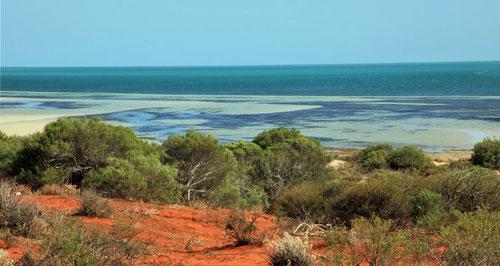 Letzter Blick auf die Shark Bay