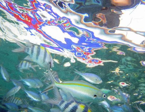 Spiegelung vom Boot in der Unterwasserwelt