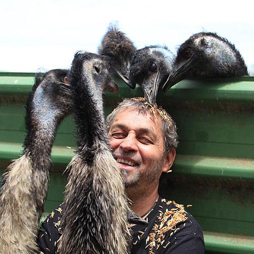 Emus picken von Fredis Kopf