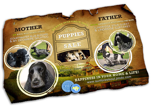 Kennel Sunforest Soul; english kocker spaniel; FCI; UKU; Ukrainian kennel union; advertising; poster; puppies; sale; template; layout; order; online; PRS LA BEAUTY; Galina Chernichko; design; Kiev; ukraine;