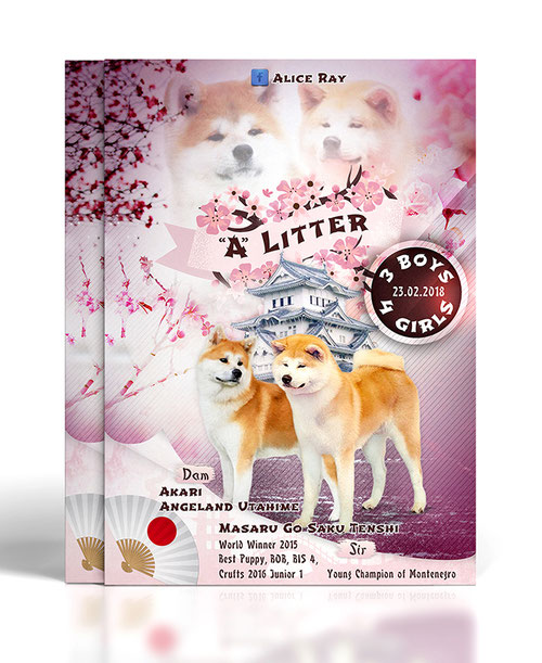poster template; pink; Japanese style poster; asian poster template; dogs pink asian japanese presenation design; Japanese Akita poster presentation litter design; PRS LA BEAUTY;