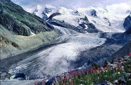 Am Weg zur Bovalhütte: Morteratschgletscher im Jahr 1981, darüber Piz Palü und Bellavista. Inzwischen hat der Gletscher deutlich an Länge und Volumen verloren. Link zu www.gletscherarchiv.de durch Klicken auf Foto.