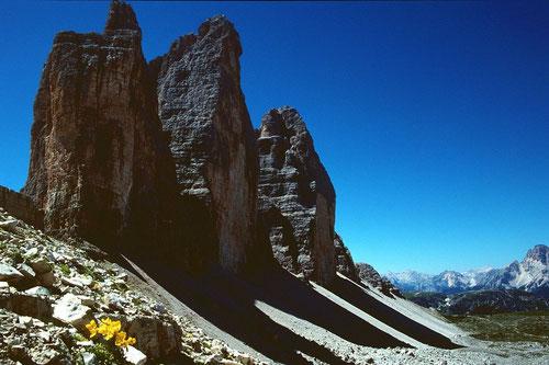 Drei Zinnen und Alpenmohn vom Weg unterhalb des Paternsattels