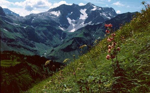 Türkenbundlilien im Anstieg zum Rücken der Höferspitze. Hinten Butzensattel und Braunarlspitze mit dem kleinen Hochgletscher