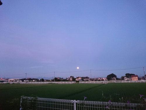 ほぼ毎朝4:50ごろにあさんぽに出かけるのですが、今日は西の空に月がくっきり見えました。調べると昨夜は満月だったようですね。だから、真ん丸お月さんが見えたのか~。日の出前ということもあってくっきり見えたのかな。着実に夜の時間が長くなっていますね。このまま季節が進めば4時50分はまだ真っ暗です。季節の移り変わりを肌で感じることができました(^^)