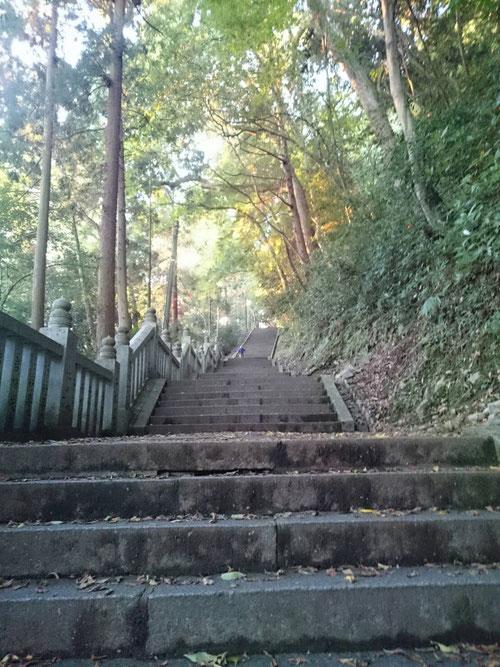 今朝の総長&校長の香川あさんぽでは、金刀比羅宮1368段に挑戦しました!途中の本宮785段までは全員で登ったのですが、そこからは校長と名古屋校の森校長の2人が、頂上の1368段に挑戦しました。ずっとずっとずっと階段を登っていきます。途中平坦な道もあるのですが、とにかく階段です。