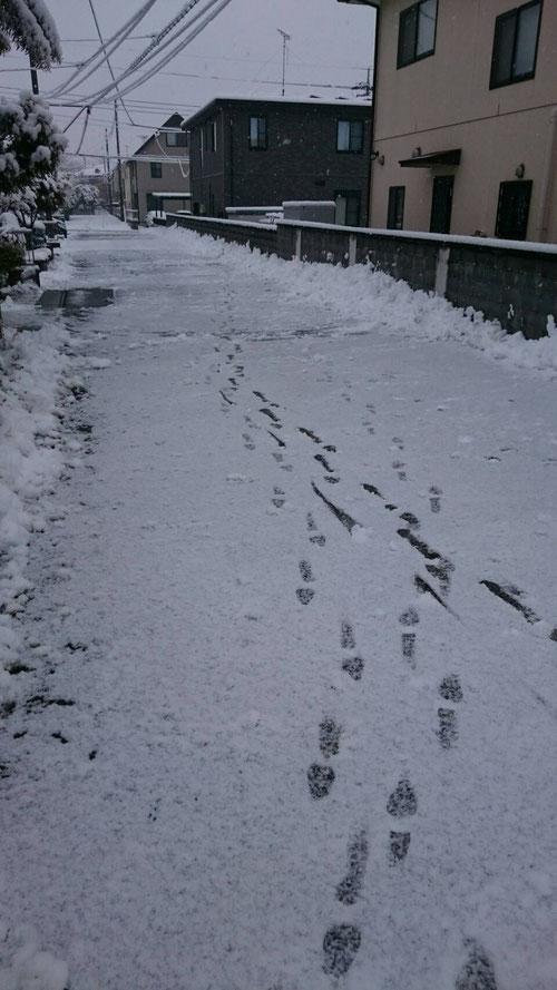 朝5:50分、自宅前の道路の雪かきスタート。かいてもかいても雪が舞ってきて、道路に雪が積もる。ただ、今日の雪は溶けやすい雪でした。これは気温が上がればすぐに溶ける雪だ。とりあえず、道路の端に雪を運んじゃおう。これで2週連続の雪かき。来週もまた雪が降るとか、、、おいおい、ホントに氷河期に入ったのかよ(汗) かくこと1時間半、道路の雪もだいぶなくなりました。みなさん、気を付けて出掛けてくださいね。