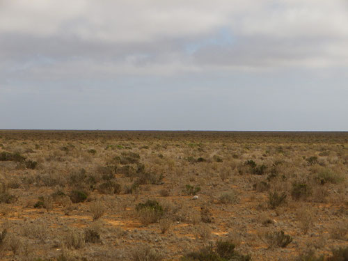 The treeless plain