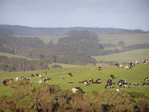 The countryside on the way to Johanna beach