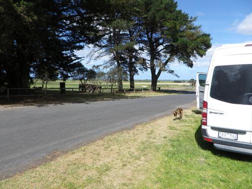 Freecamp at base of Mt Shank