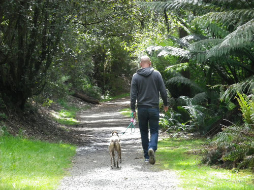 A quick walk at Lilydale