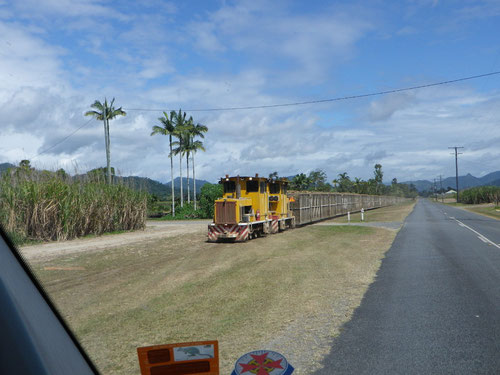 Sugar cane crop train