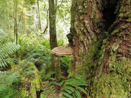 A mushroom on a tree