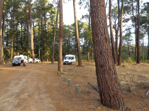 Tuart Forest free camp