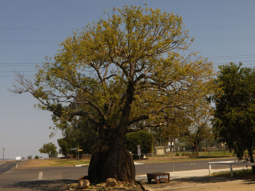 Weird trees in Mitchell