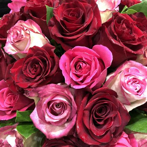 Roses Exploreur