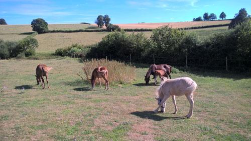Unsere kleine Ponyherde ist seit Juli 2016 bei uns. Die Tiere stammen aus einem Tierschutzfall