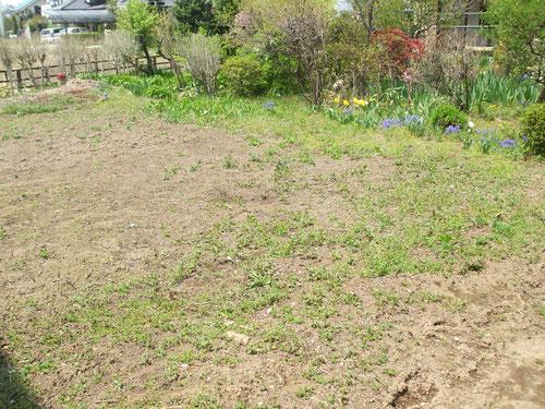 今年は寒かったせいか雑草がまだ小さい