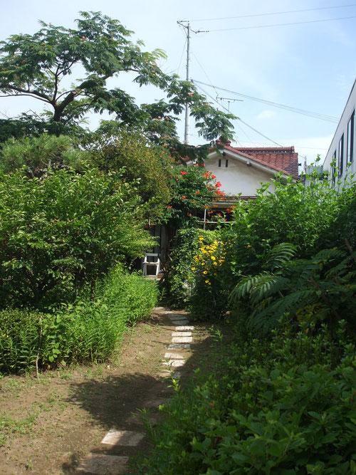夏は鬱蒼とする庭。