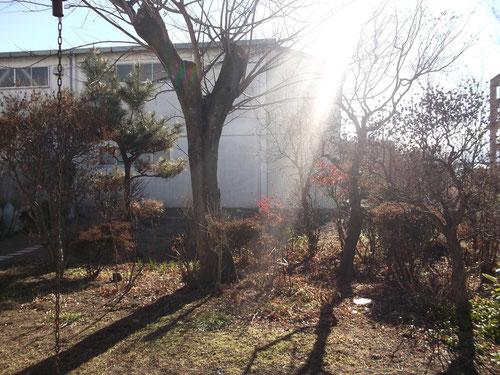 お正月の佐久の庭