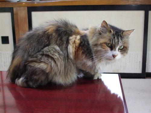 母猫のミーちゃん、2008年4月15日死亡、推定年齢7~8歳