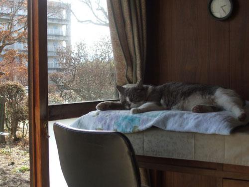 窓辺は外も良く見えるし陽も当たるお気に入りの場所