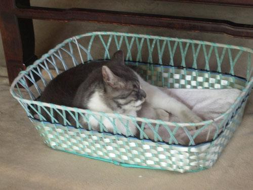 昭和レトロな脱衣かごがグリの熟睡用ベッド