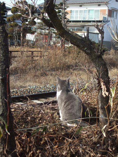 庭の端にたたずむグリ