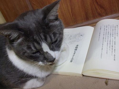 読書の邪魔をする、読んでいるのは東海林さだおの「笑いのモツ煮込み」