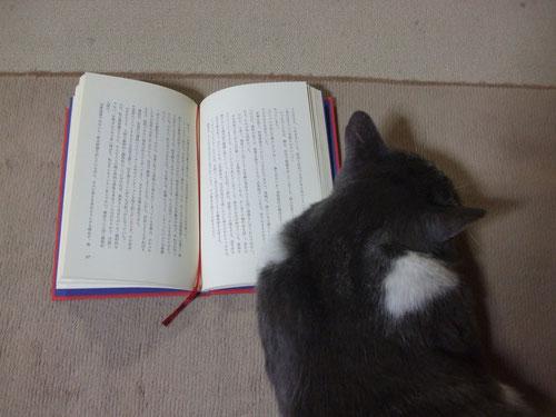 再び読書の邪魔、読んでいるのは加藤まなぶの「恋と花火と観覧車」