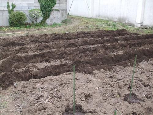 畝を5列作りました。手前の棒は南瓜の種を植えた目印