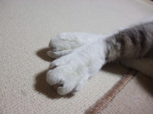 足も短いけど・・・
