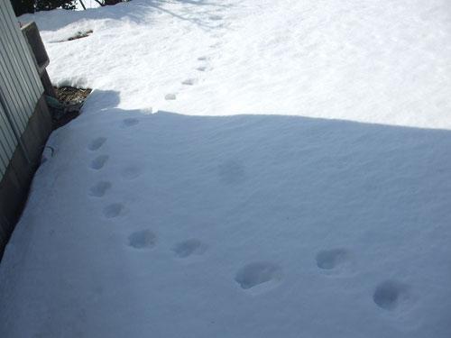 グリの足跡