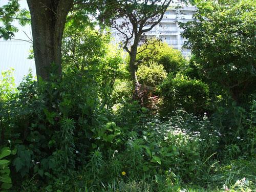 庭は雑草だらけ