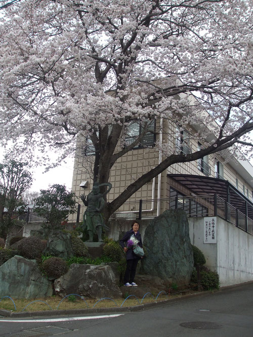 萩霊園入口の桜の大木