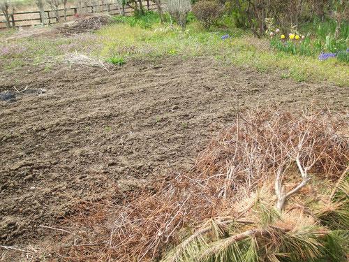 雪が降り土が凍り溶けてぐしゃぐしゃになりやっと乾いた畑、荒れています。